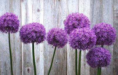 7 fleurs à cultiver soi-même... et à déguster