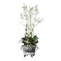 Neruda Potted Orchid (60154)