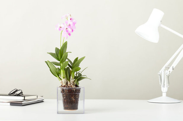 Contemporary Indoor Pots & Planters by naiise.com