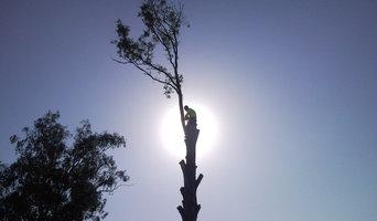 Tree Removal Sydney