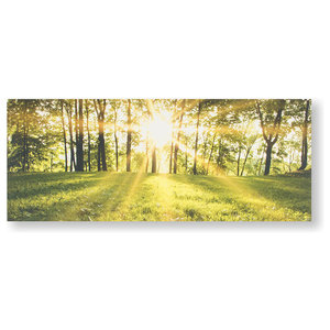 """""""Tranquil Forest Fields"""" Printed Canvas"""