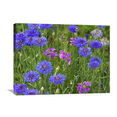 """""""Cornflower And Pointed Phlox Blooming In Grassy Field, North America"""" Artwork"""