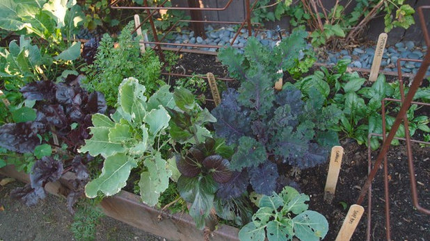 Houzz TV: Big Garden in Small California Space