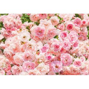 Rosa Pastel Petals Photo Wall Mural, 368x254 cm