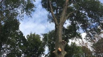 Tree Work Climber