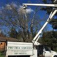 Pro Tree Services's profile photo