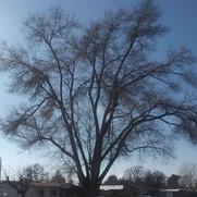 Arbor Services's photo