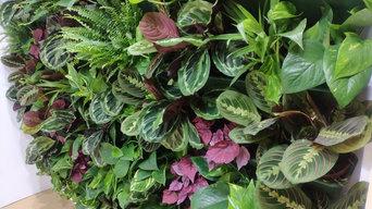 Вертикальный сад фитостена