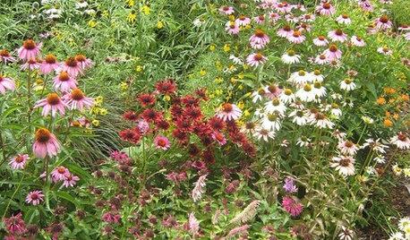 Central Plains Gardener's June Checklist