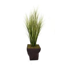 "70"" Tall Onion Grass With Twigs, 17"" Fiberstone Planter"