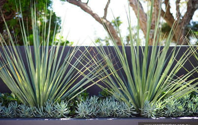 Poolside Plantings: 9 Ideas for Easy-Care Combinations