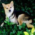 Gorski Landscaping's profile photo