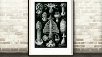 Ernst Haeckel Fine Art Prints | Fine Art Papers | Gallery Wrapped Canvas