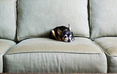 What Chihuahuas Taught Me About Interior Design