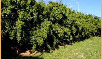 Sydney Bamboo