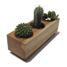 Modern Succulent Planter, Poplar, 3x3x9