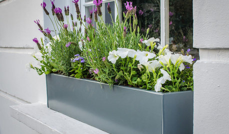 How to Have a Lush, Blooming Window Box Garden