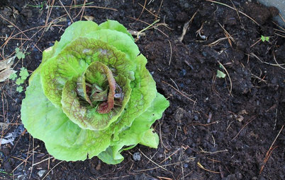 How to Get Fertile Soil for Your Edible Garden