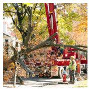 Bentley Tree Care, LLC's photo