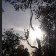 Avancerad Trädfällning i Nora ABs profilbild