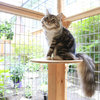 Pet's Place: Custom Catio Built for a Cute and Curious Kitty
