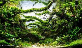 The Creek of Desire