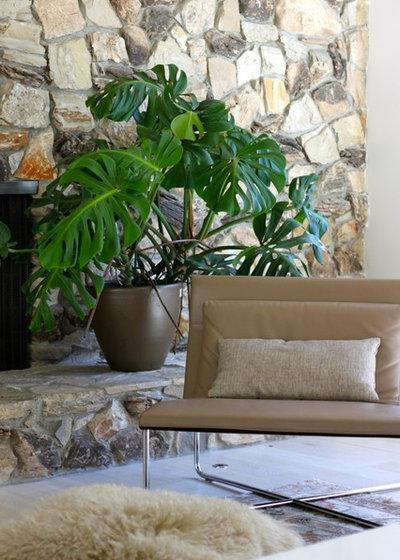 Wohin mit den zimmerpflanzen 12 gestaltungsideen f rs - Zimmerpflanzen gestaltungsideen ...