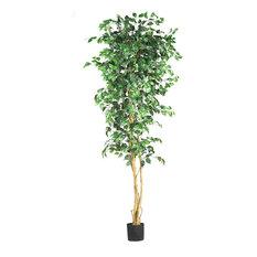 7' Ficus Silk Tree