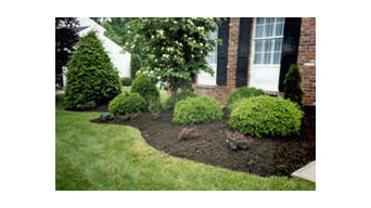 Landscaping Yard 1000-3000 sq feet