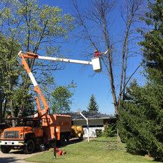 Dayton Tree Service Springboro Oh Us