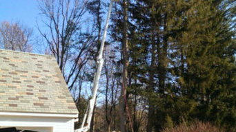 Recent Tree & Stump Removal Projects