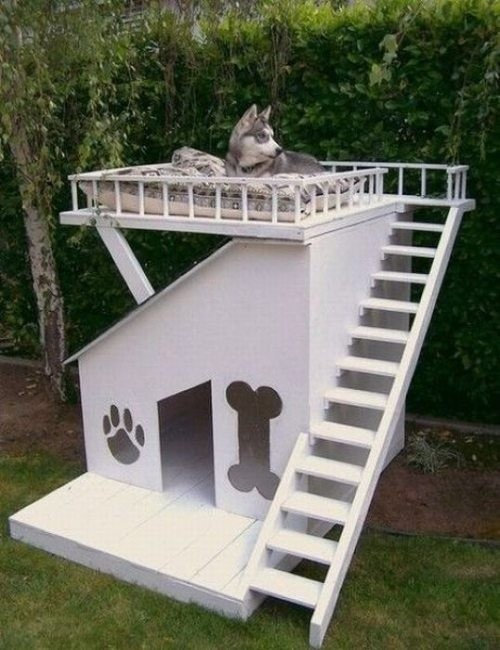 Want To Build A Comfy And Modern Dog House For Our 3 Small Dogs