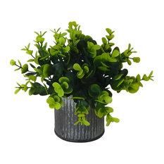 Naturalist eucalyptus bonsai in farmhouse style vase