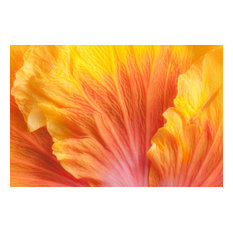 """Flower Flames, Canvas Giclee, 24""""x16"""""""