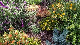 Plants we love