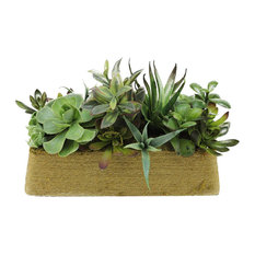 "12.5"" Artificial Mixed Green and Red Succulent Plants in a Rectangular Twine Pot"