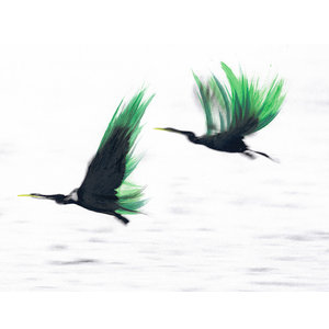 """""""Flight"""" Signed Limited Edition Photography Artwork, 35x40 cm"""