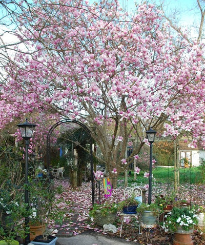 users magnolia