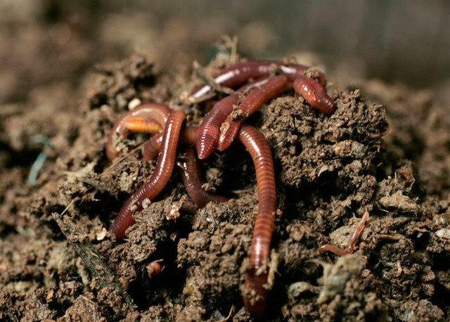 Природное земледелие: Мульча и другие особенности ухода за садом