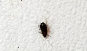 Cockroach Extermination in McKinney, TX
