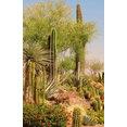 Desert Gardens Nursery's profile photo