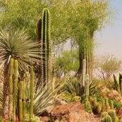 Desert Gardens Nursery