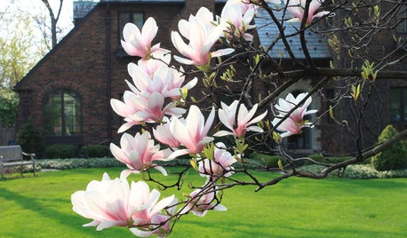 Visions of Magnolia Blossoms From Coast to Coast