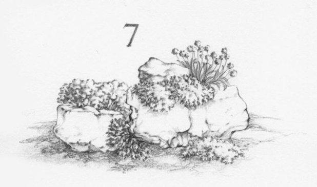 Guida houzz per esperti come creare un giardino roccioso - Costruire giardino roccioso ...