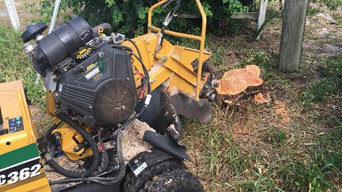 RJ Clements Stump Grinding