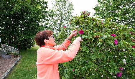 Работа над ошибками: Что пошло не так с розами