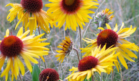 10 Top Native Plants for the Rocky Mountain Region