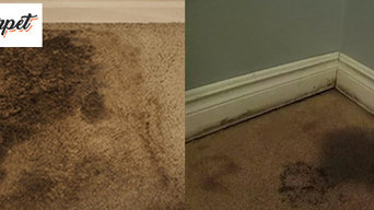 Fresh Carpet  Water Damage Repair Canberra