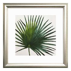 Evergreen Fan Palm Framed Art Print, 31 x 31 cm