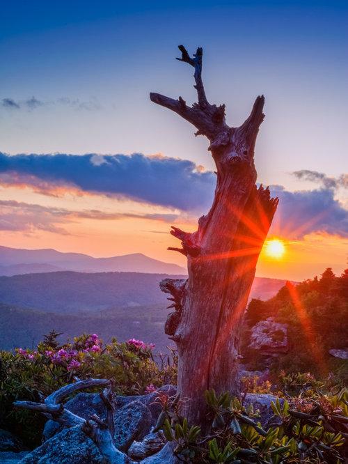 Sunset Tree - Photographs